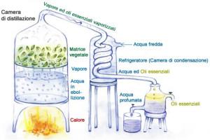 distillazione-acqua-profumata