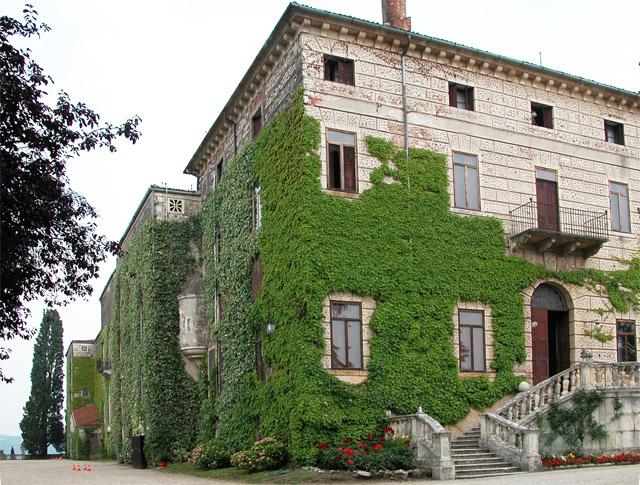 La pianta di dioniso l edera essenzialmente naturale - Edera da interno ...