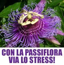 images passiflora